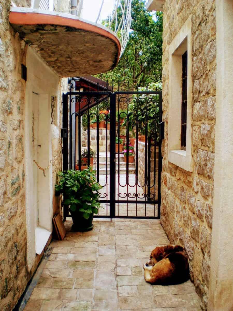 budva montenegro sleeping dog