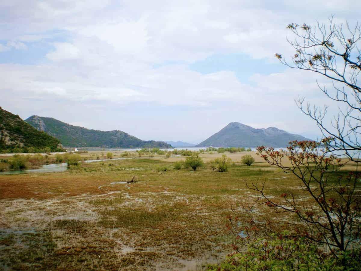 skadar lake bog view montenegro