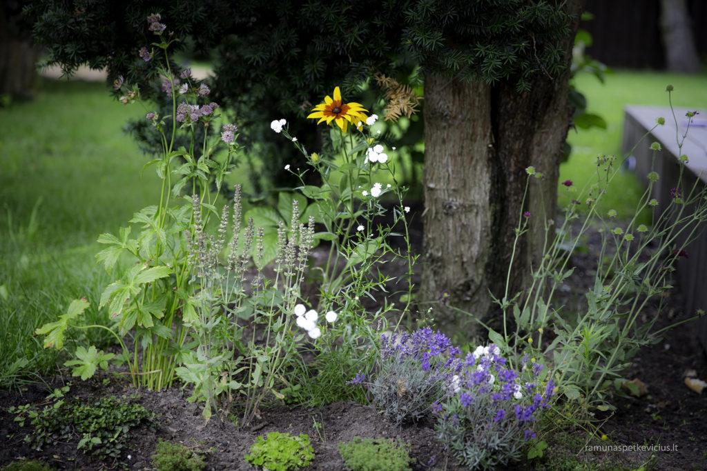 Pavilnys flowers