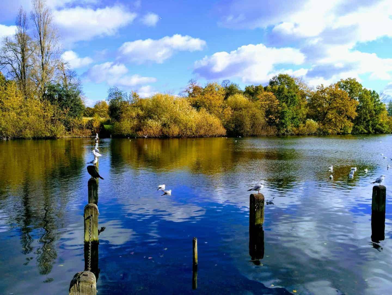 Hyde Park London in November