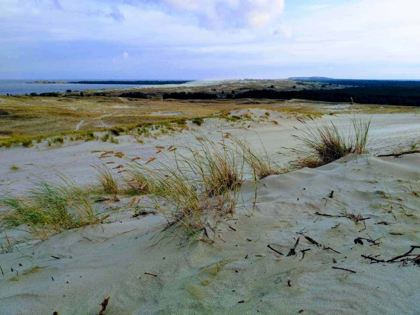 Sand dunes in Curonian Spit, Lithuania