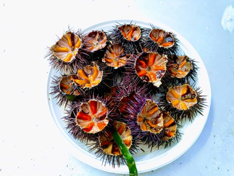 Sea Urchins in Bari