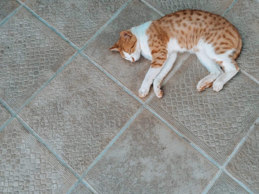 brown white cat sleeping on brown tiles
